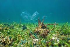 在海底的五颜六色的水下的生活与水母 库存图片