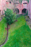 在海得尔堡城堡废墟塔的树在海得尔堡 库存图片