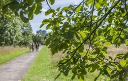 在海德公园在一个晴天, Lodnon 免版税库存照片