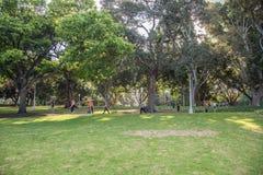 在海德公园的城市生活 免版税库存照片