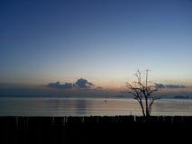 在海旁边的剪影树 免版税库存图片
