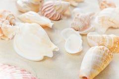 在海沙的蛤蜊 免版税库存图片