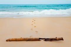 在海沙滩的脚印与在vacatio的干竹子 库存照片