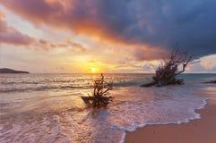 在海波浪的死的树干 免版税库存照片