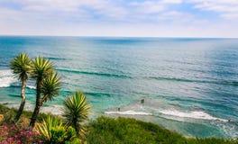 在海洋前面的棕榈树 库存照片
