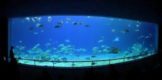 在海洋博物馆的盛大水族馆 库存照片