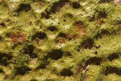 在海洋岩石的生苔绿色火山口 库存图片
