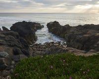 在海洋形成一个小海湾的岩石的植物 免版税库存图片