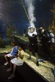 在海洋水族馆的勇敢的旅游潜水 库存图片