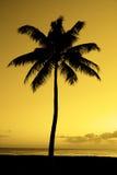 在海洋海滩热带地点附近的棕榈树日落 免版税库存照片