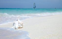 在海洋海运壳附近 免版税库存照片