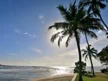 在海洋的海岸的棕榈 库存图片