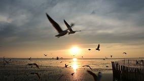 在海洋的美好的日出有飞行海鸥鸟的 股票视频