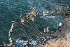 在海洋的飞行的树 库存图片