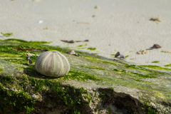 在海洋石头的壳 库存图片