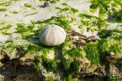 在海洋石头的壳 免版税库存图片