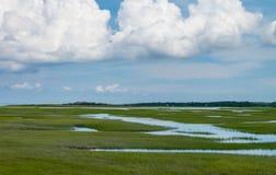 在海洋附近的微咸的水沼泽鳕鱼角的 库存照片