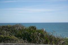 在海洋附近的植物 免版税库存照片