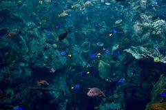 在海洋 免版税库存图片