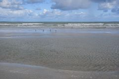 在海浪的四只海鸥 库存照片