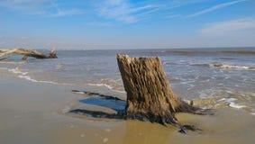 在海浪的树桩 免版税库存图片