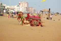 在海海滩休息的骆驼 免版税库存图片