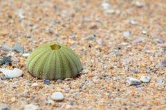 在海海滩的残破的壳巧克力精炼机或礁石 库存图片