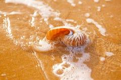 在海海滩的贝壳舡鱼与在日出太阳ligh下的波浪 免版税图库摄影