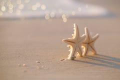 在海海洋的两个海星在佛罗里达,软的柔和的日出靠岸 库存照片