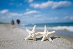 在海海洋的两个海星在佛罗里达,软的柔和的日出靠岸 图库摄影