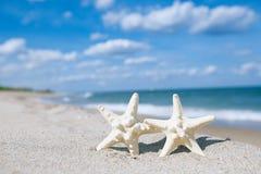 在海海洋的两个海星在佛罗里达,软的柔和的日出靠岸 免版税图库摄影