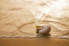 在海海滩的贝壳舡鱼与在日出太阳ligh下的波浪 图库摄影