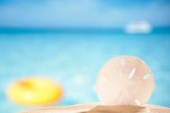 在海海滩背景的沙钱壳 免版税库存图片