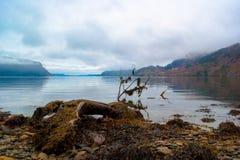 在海湾前面的下落的树 免版税库存照片