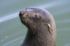 在海湾小船行程walvis附近 免版税图库摄影