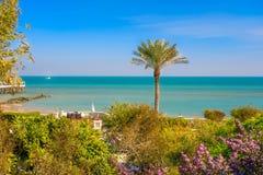 在海湾海前面的一棵棕榈树在科威特 库存照片