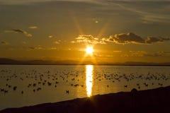 在海湾的日落与水禽 免版税图库摄影