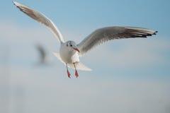 在海湾的海鸥 库存照片