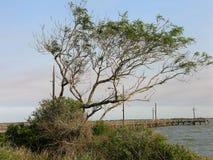 在海湾的豆科灌木 图库摄影