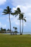 在海湾附近的棕榈树 图库摄影