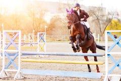 在海湾马的年轻女性车手跳过障碍 免版税库存照片