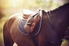 在海湾马马鞍在被佩带回到执行在骑马竞争 免版税库存照片