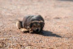 在海滨的流浪狗 免版税图库摄影