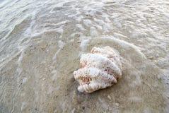 在海滨的热带贝壳在日出光 免版税图库摄影