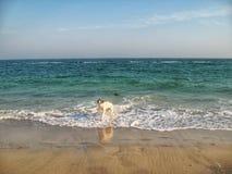在海滨的狗 库存图片