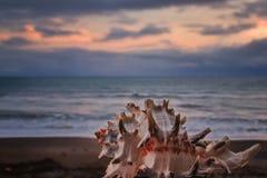 在海滨的贝壳 免版税库存照片