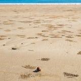 在海滩、背景或者墙纸,省Krabi的小的螃蟹 免版税库存图片