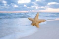 在海滩、蓝色海运和日出的海星海星 免版税库存图片