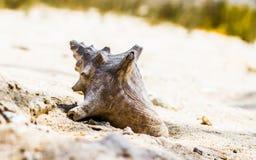 在海滩丢失的壳 免版税图库摄影