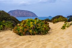 在海滩沙子的绿色沙漠植物 库存图片